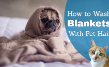 removing pet hair from blankets