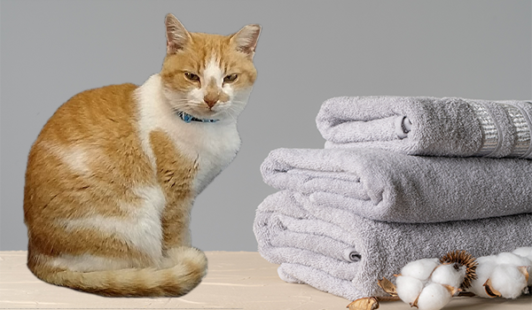best wash cycle for towels